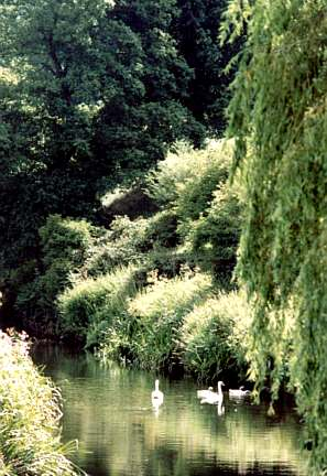 The Heart of England: Stoneleigh Swans